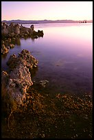 Tufas at sunrise. Mono Lake, California, USA (color)