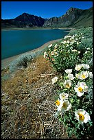 Flowers on the shores of June Lake. California, USA ( color)