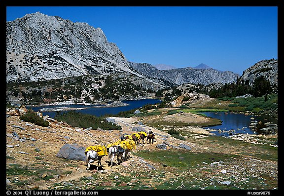 Pack train of horses, Bishop Pass trail, Inyo National Forest. California, USA (color)