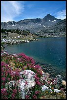 Indian Paintbrush and Saddlebag Lake, Inyo National Forest. California, USA (color)