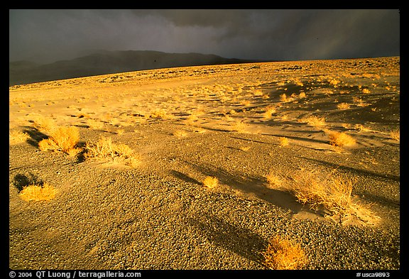 Basin with sage, Inyo Mountains  in stormy weather, late afternoon. California, USA (color)
