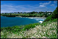 Spring wildflowefrs and Ocean, town on a bluff. Mendocino, California, USA
