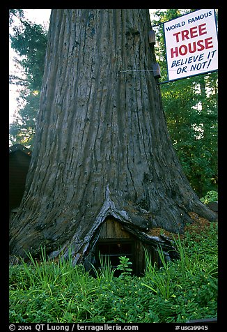Picture Photo World Famous Tree House Near Leggett
