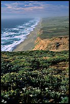 Point Reyes Beach, afternoon. Point Reyes National Seashore, California, USA (color)