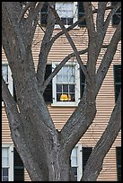 Tree and facade, Hawkes House, Salem Maritime National Historic Site. Salem, Massachussets, USA ( color)