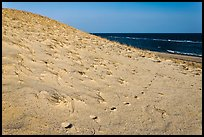 Sand dune and ocean, early morning, Coast Guard Beach, Cape Cod National Seashore. Cape Cod, Massachussets, USA