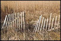 Fence and tall grass, Cape Cod National Seashore. Cape Cod, Massachussets, USA