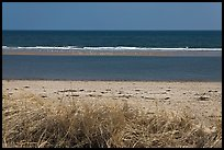 Grass, beach, and sand bar, Cape Cod National Seashore. Cape Cod, Massachussets, USA