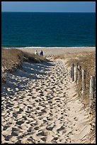 Path to ocean through dunes and tourists, Cape Cod National Seashore. Cape Cod, Massachussets, USA