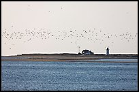 Flock of birds and Race Point Light, Cape Cod National Seashore. Cape Cod, Massachussets, USA