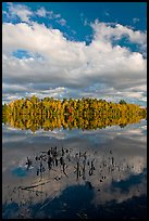 Reeds, autumn reflections, and cloud, Greenville Junction. Maine, USA (color)