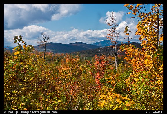 Autumn landscape with colorful leaves and distant mountains. Maine, USA (color)