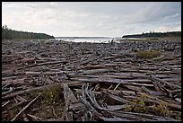 Dead trees on the shore of Chesunkunk Lake. Maine, USA (color)