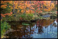 Pond surrounded by trees in fall colors. Maine, USA ( color)