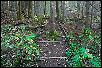 Tree growing in middle of abandonned railroad track. Allagash Wilderness Waterway, Maine, USA