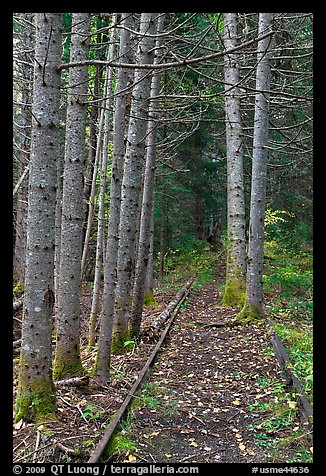 Forest reclaiming railway tracks. Allagash Wilderness Waterway, Maine, USA (color)