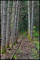 Forest reclaiming railway tracks. Allagash Wilderness Waterway, Maine, USA
