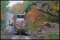 Log loader lifts trunks into log truck. Maine, USA ( color)