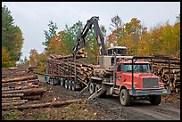 Logging operation loading tree trunks onto truck. Maine, USA ( color)