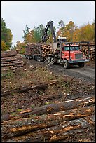 Forestry site with working log truck and log loader. Maine, USA ( color)