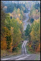 Meandering forestry road in autumn. Maine, USA (color)