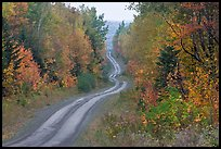 North Woods in autumn with twisting unimproved road. Maine, USA ( color)