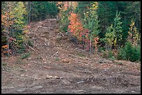 Clear cut gully in forest. Maine, USA ( color)