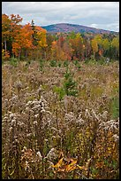 Clearing, forest in fall foliage, and hill. Maine, USA ( color)