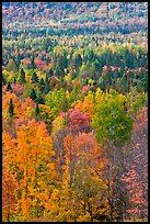 Septentrional forest in the fall. Maine, USA (color)