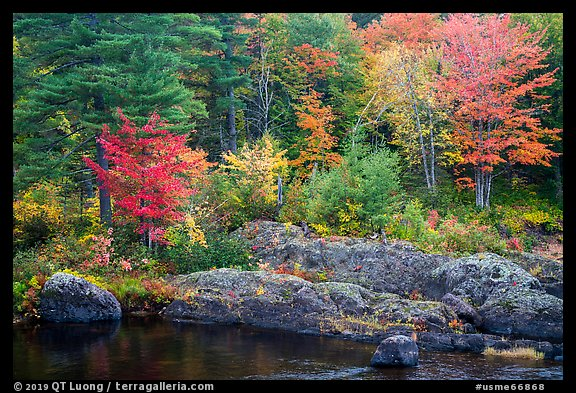 Rocks and trees in fall foliage, along East Branch Penobscot River. Katahdin Woods and Waters National Monument, Maine, USA (color)