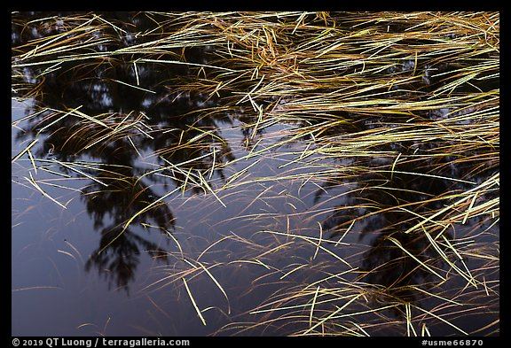 Grasses and reflections in beaver pond, Sandbank Stream. Katahdin Woods and Waters National Monument, Maine, USA (color)