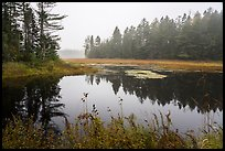 Pond in fog, Sandbank Stream. Katahdin Woods and Waters National Monument, Maine, USA ( color)