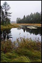 Grasses and pond, Sandbank Stream. Katahdin Woods and Waters National Monument, Maine, USA ( )