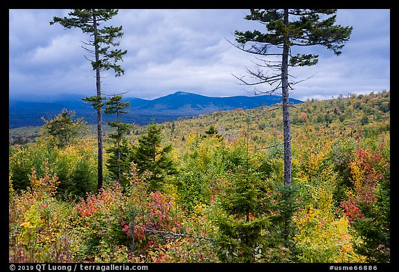 Transitional deciduous northern hardwood forest and struce fir mix. Katahdin Woods and Waters National Monument, Maine, USA (color)