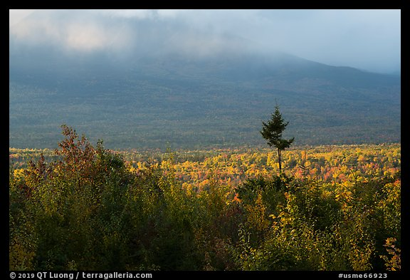 Valley with northern hardoods trees in autumn. Katahdin Woods and Waters National Monument, Maine, USA (color)