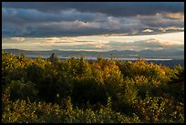 Millinocket Lake from Overlook, evening. Katahdin Woods and Waters National Monument, Maine, USA ( )