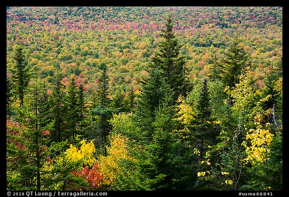 Spruce and valley covered by northern hardwood trees in autumn. Katahdin Woods and Waters National Monument, Maine, USA (color)