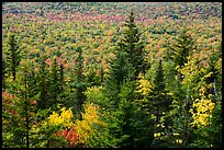 Spruce and valley covered by northern hardwood trees in autumn. Katahdin Woods and Waters National Monument, Maine, USA ( )