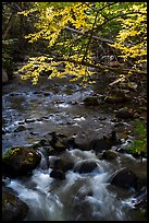 Branches in autumn foliage overhanging above Katahdin Brook. Katahdin Woods and Waters National Monument, Maine, USA ( color)