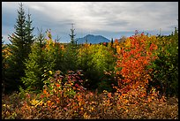First view of Katahdin in autumn. Katahdin Woods and Waters National Monument, Maine, USA ( )