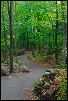Path in forest, Franconia Notch State Park. New Hampshire, USA (color)