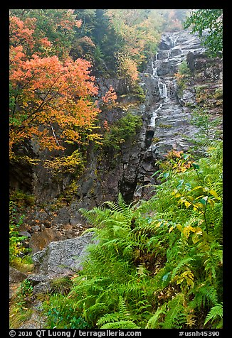 Ferns, cascade, and trees in autumn foliage, Crawford Notch State Park. New Hampshire, USA