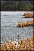 Reeds and frozen pond. Walpole, New Hampshire, USA