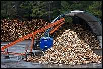 Pile of timber logs. New Hampshire, USA ( color)