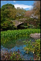 Aquatic plants and stone bridge, Central Park. NYC, New York, USA