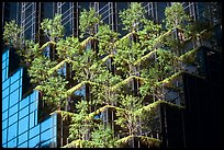 Hanging gardens on Trump Tower. NYC, New York, USA ( color)