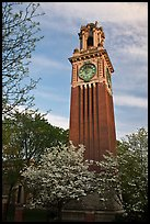 Trees in bloom and Carrie Tower, Brown University. Providence, Rhode Island, USA (color)