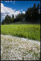 Hailstones in meadow, Black Hills National Forest. Black Hills, South Dakota, USA (color)