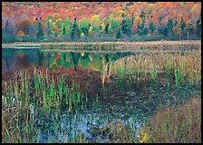 Autumn Reflections, Green Mountains. Vermont, New England, USA