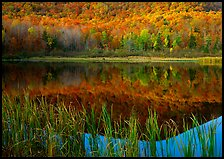 Reeds, and reflection of hill, Green Mountains. Vermont, New England, USA (color)